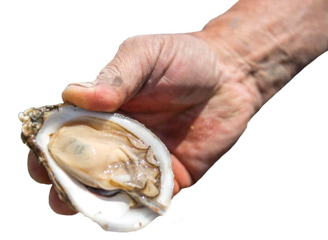 Hand holding an oyster in a shell