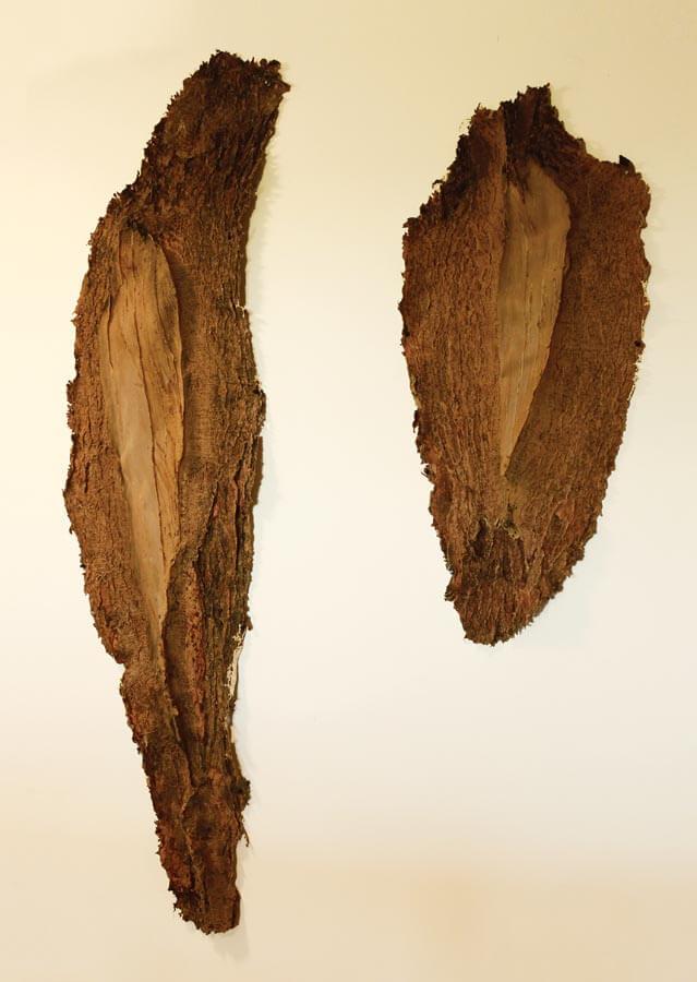 Tree casts