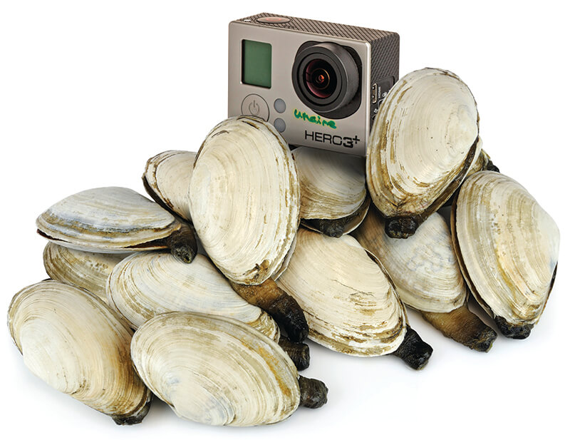 Clams and a GoPro camera