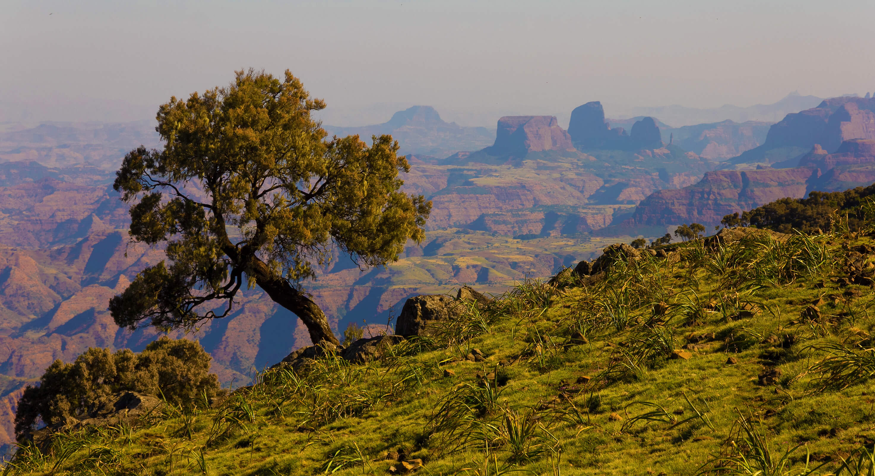 African-landscape