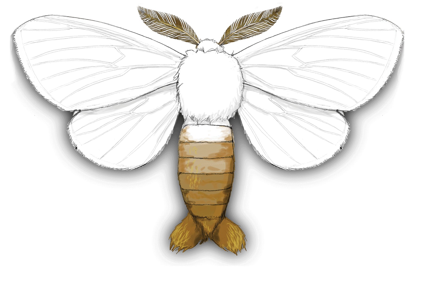 Brown-tail moth