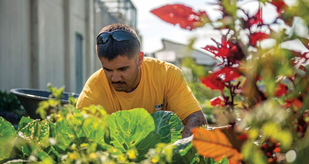 Inmate gardening