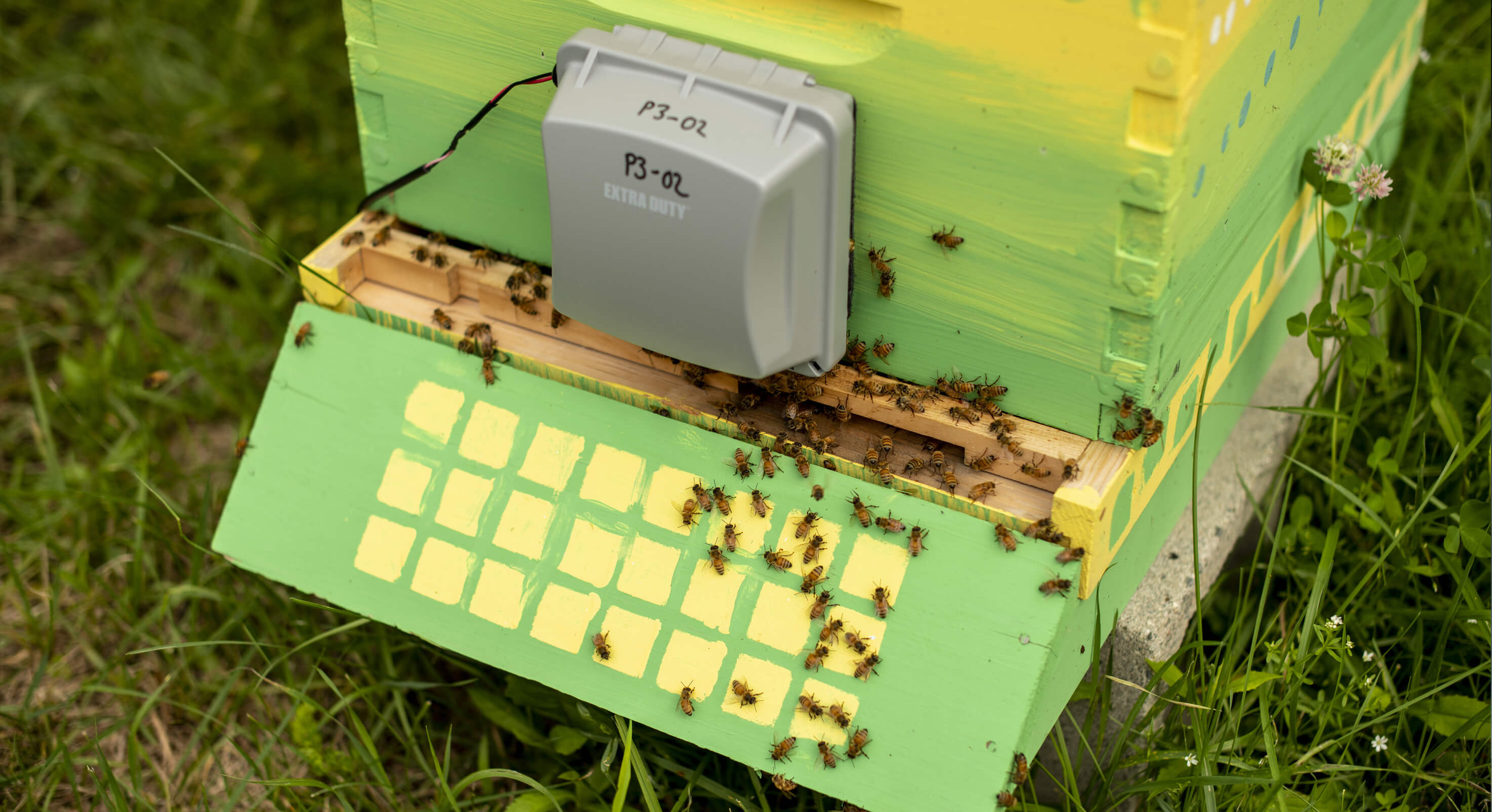 Healthy-hives-centered-image-1-1