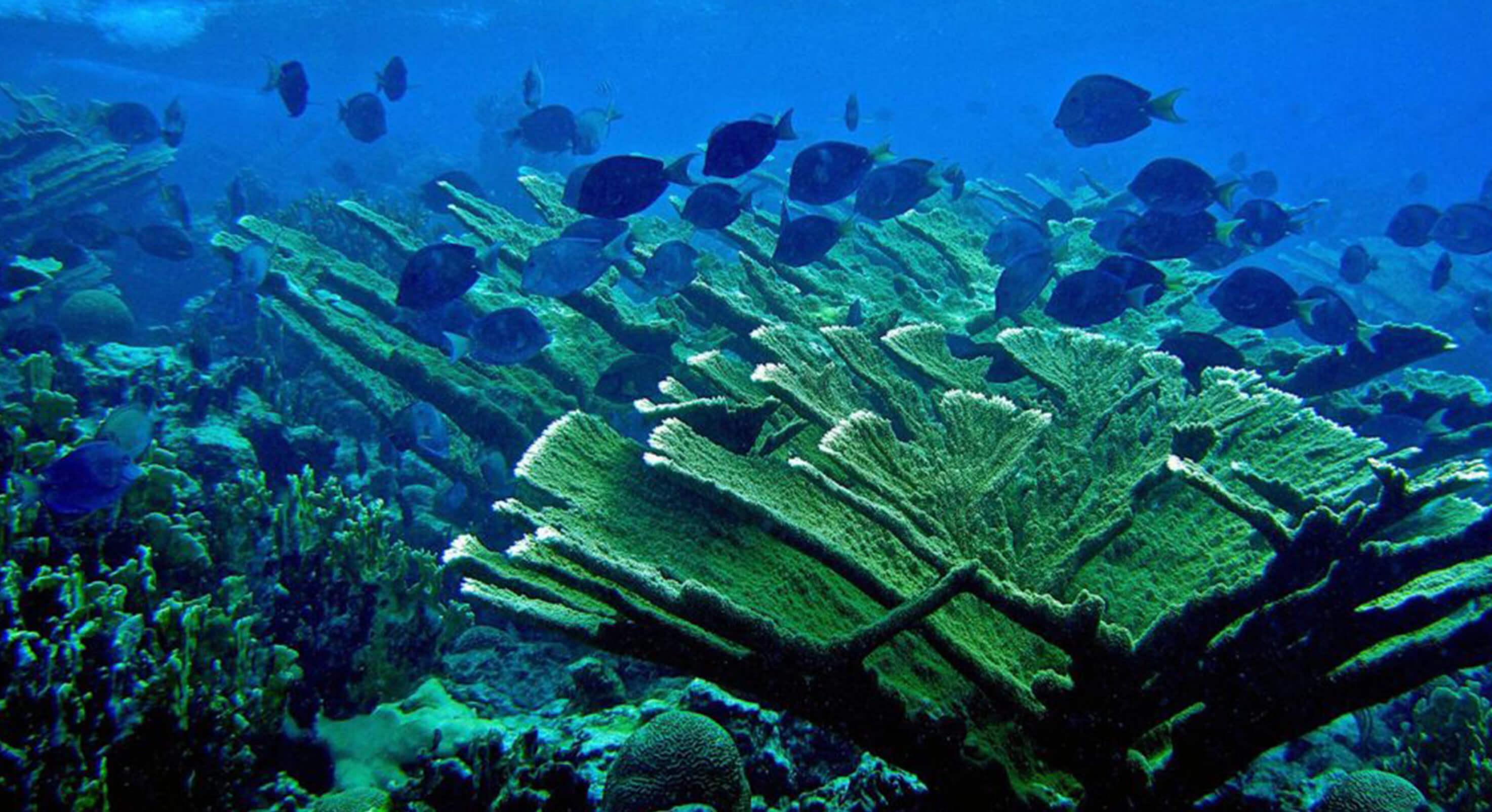 Steneck-corals-news-feature-1024x578
