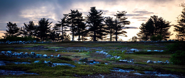 Blueberry-field-2.jpg