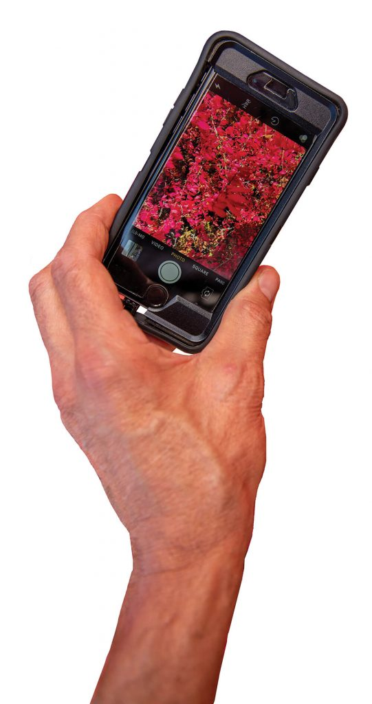Plant image on cell phone