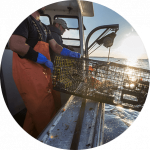 Lobster fishermen on the ocean