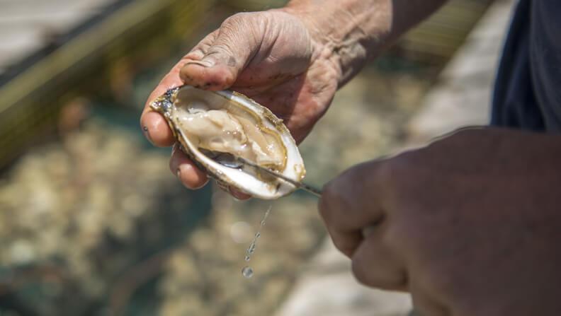 Aquaculture thumbnail