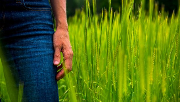 The side of a woman's body in a field of grain